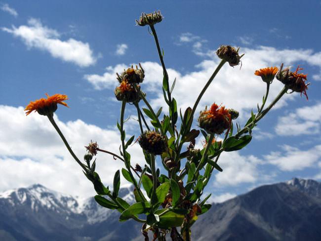 Blumen vor einer Berglandschaft