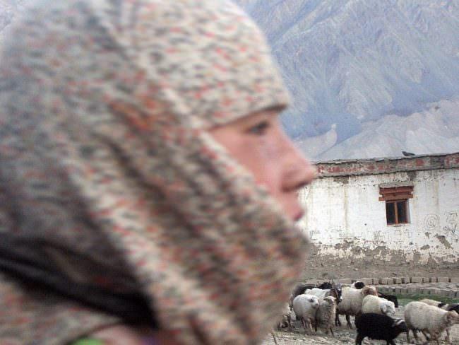 Eine Frau mit Kopftuch vor einer Schafsherde