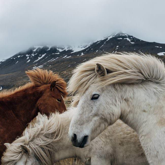 Pferde vor einem Berg