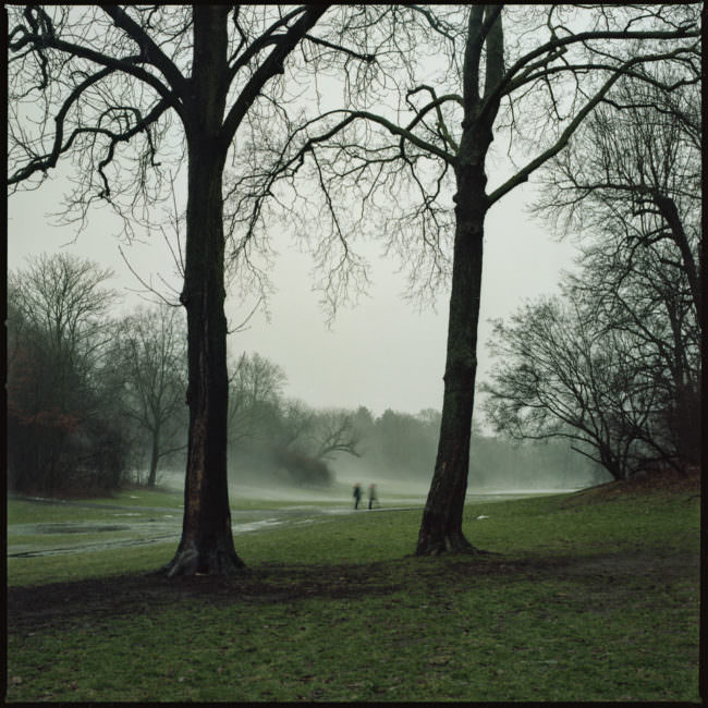Zwei Bäume im nebligen Park
