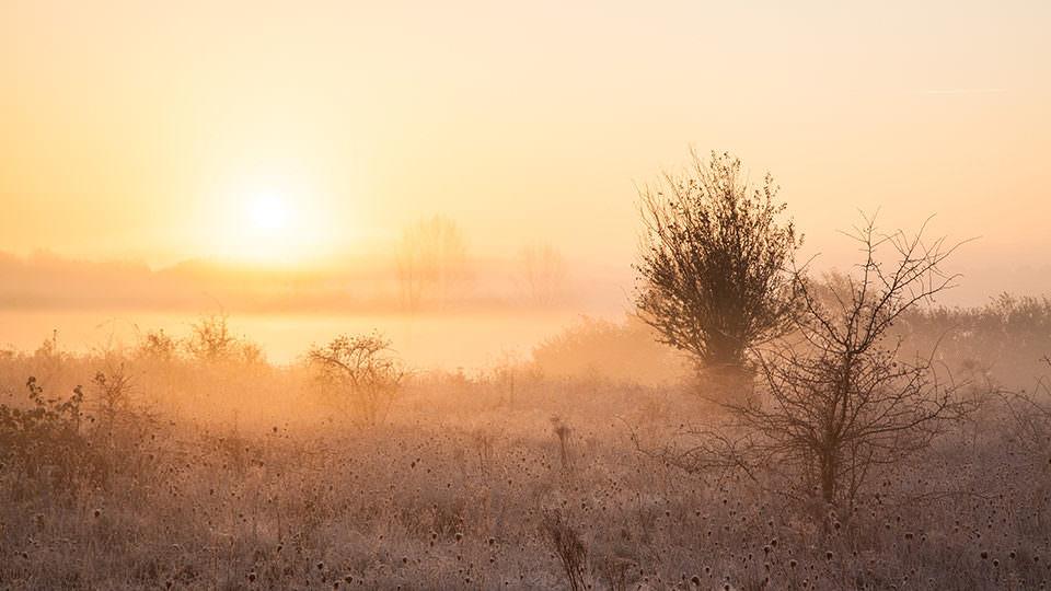 Nebel auf einer gefrorenen Wiese im Sonnenlicht