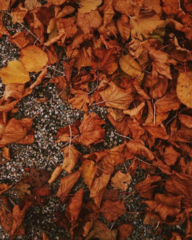Vertrocknetes Laub auf dem Boden