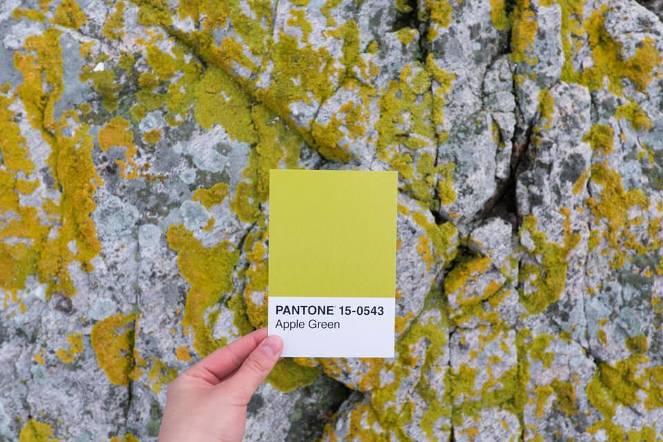 Moos auf Stein mit Farbkarte