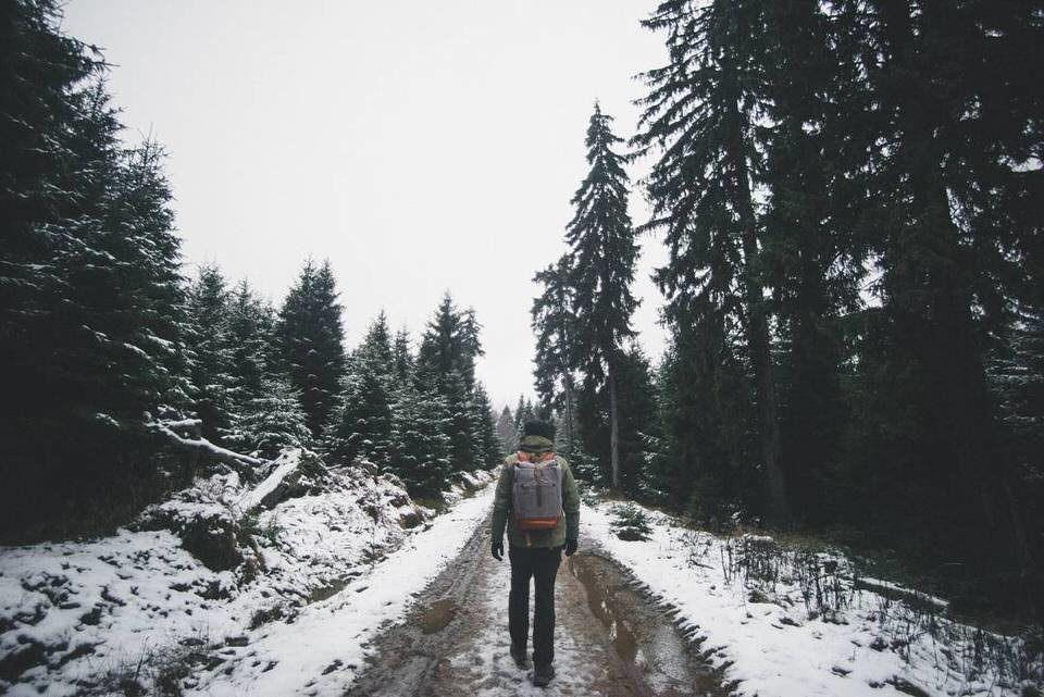 Ein Wanderer auf einem Waldweg
