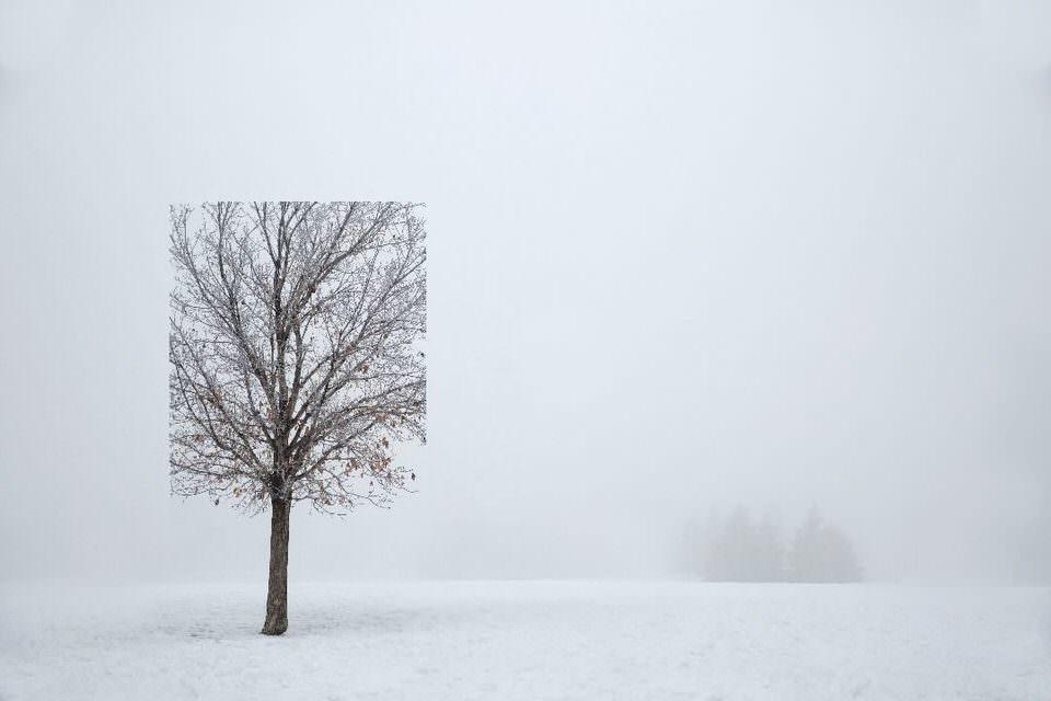 Ein quadratischer Baum im Schnee
