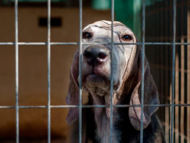 Ein Hund vor einem Gitter