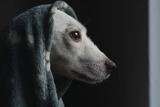 Ein Hund mit Tuch über dem Kopf