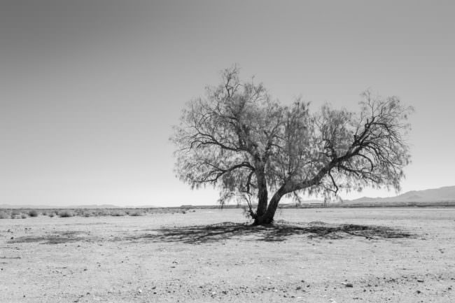 Ein Baum in einer flachen Landschaft