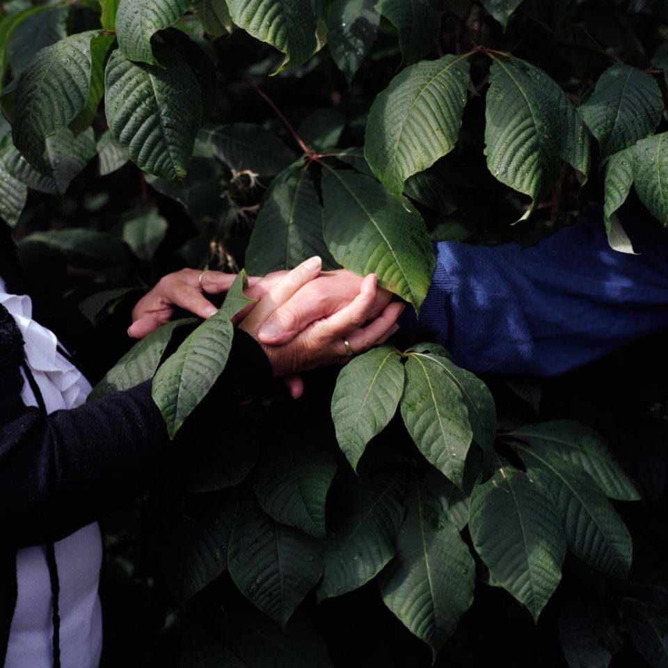 Hände ineinander verschlungen vor Blättern