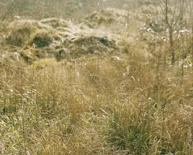 Eine Graslandschaft in gelb und grün mit jungem und altem Gras.