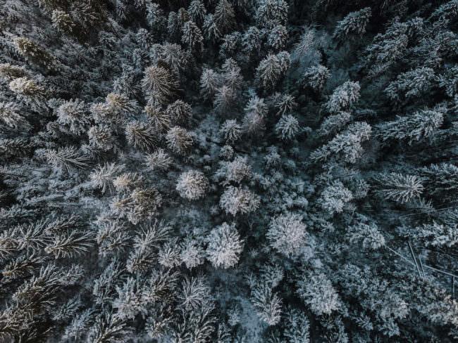 Verschneiter Wald.