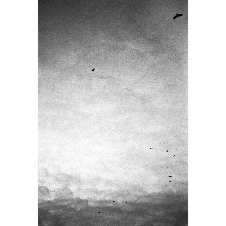 Schwarzweißer Himmel mit dichten Wolken, vor denen vereinzelt Vögel fliegen.