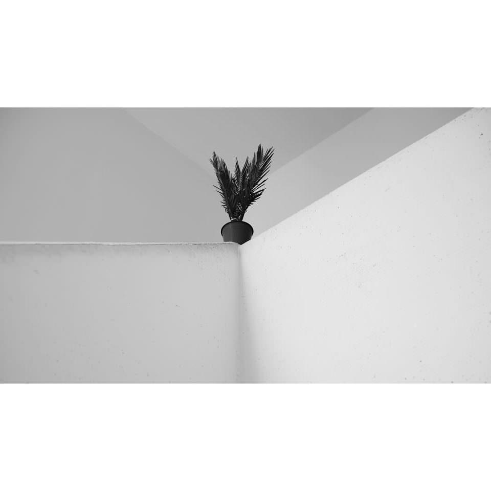 Ansicht einer Ecke in einem Innenraum, die komplett in weiß gehalten ist. Genau auf dem Eckpunkt steht eine beinahe schwarze Topfpflanze.