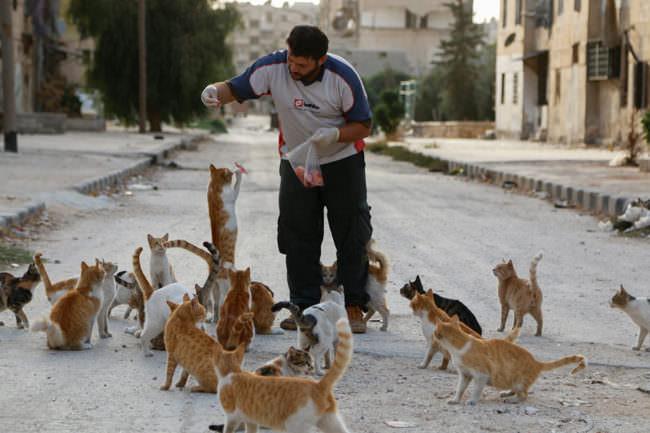 Ein Mann füttert Katzen