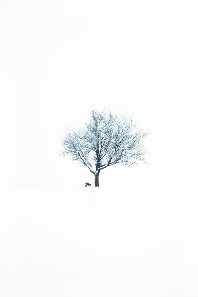 Ein Reh neben einem Baum im Schnee