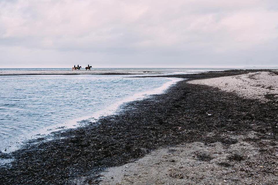 Drei Reiter*innen am Meer