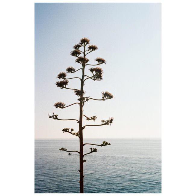 Baum vor einem Gewässer