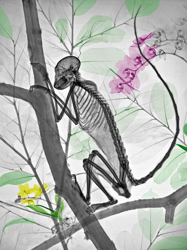 Affe im Baum.