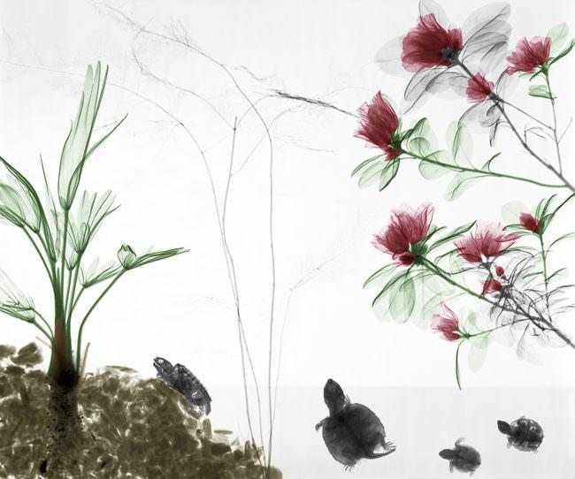 Schildkröten und durchsichtige Pflanzen.