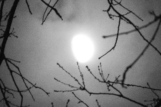 Nachthimmel mit Ästen, durch die der Mond hindurchscheint.