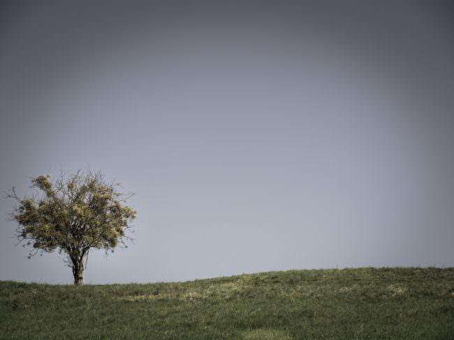 Baum auf einer Wiese