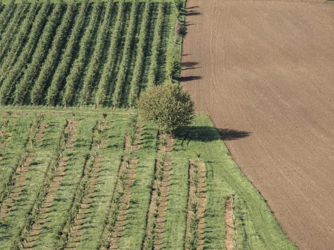 Felder und ein Baum