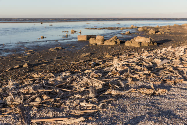 Müll und tote Fische am Strand
