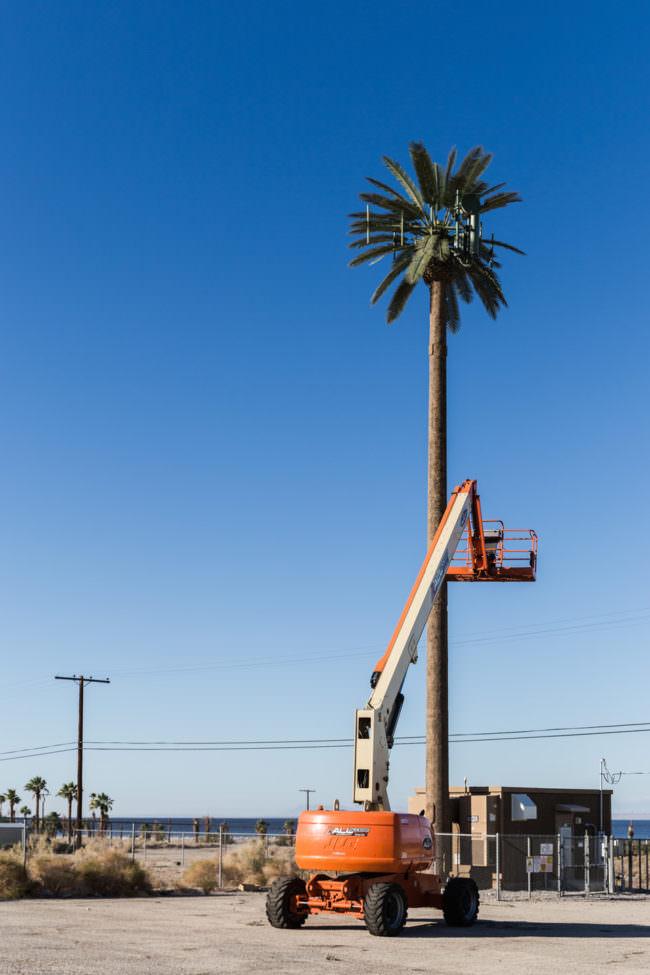 Kran an einer Palme