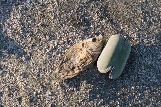 Titer Fisch mit Müll