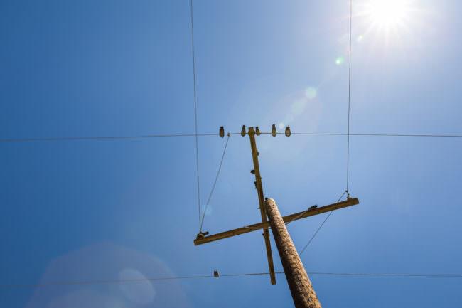 Vögel auf einem Mast