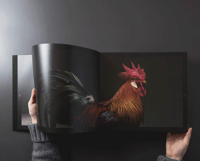 Ein geöffnetes Buch, in dem ein Huhn abgebildet ist.