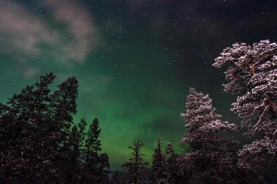 Nordlichter über einem Wald