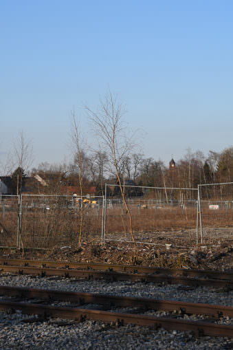 Brachlandschaft mit Bauzaun, alten Bahngleisen und kleinen Birkenbäumchen.