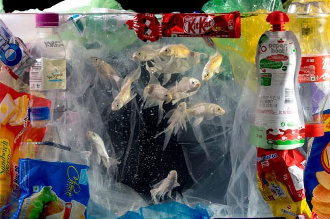 Fische schwimmen zwischen Plastik