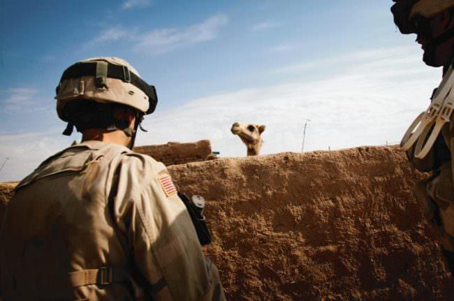 Ein Kamel sieht über eine Mauer zu einem Soldaten