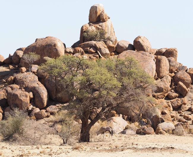 Aufeinandergetürme Felsbrocken, davor ein Baum in wüstenartiger Landschaft.