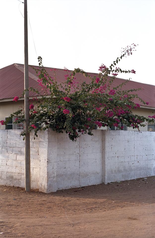 Blühender Busch zwischen Haus und weißer Mauer.