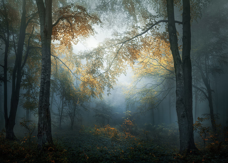 Eine Lichtung im Wald