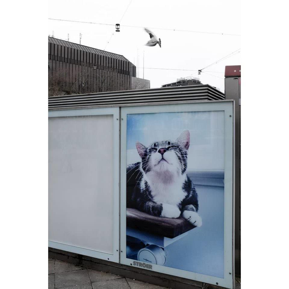 Werbetafel mit Bilder einer Katze. Darüber fliegt ein Vogel.