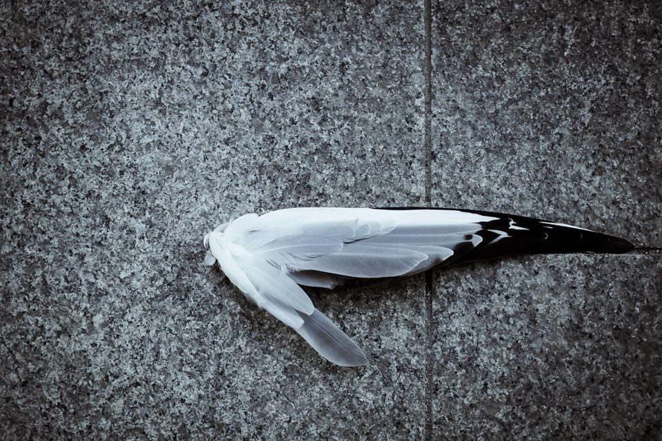 Ein Flügel auf dem Boden