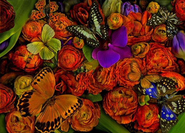Aufsicht auf bunte Blüten und Schmetterlinge.