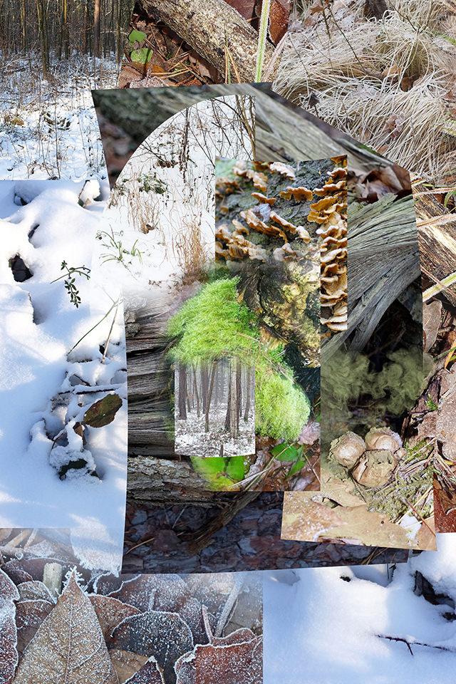 Übereinandergelagerte Naturbilder.