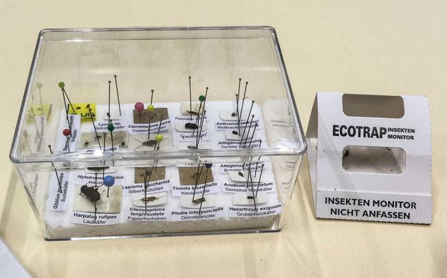 Durchsichtige Kiste mit aufgespießten Käfern. Daneben Papphülle mit Aufschrift.