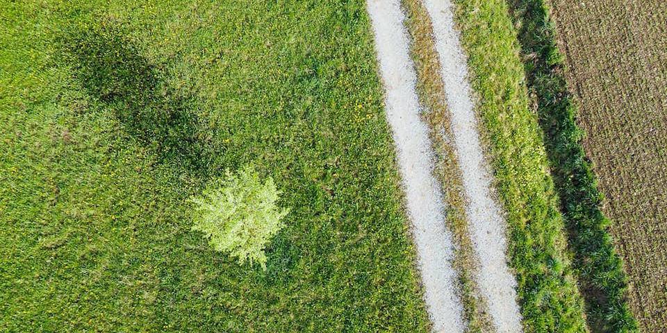 Luftaufnahme eines Feldes mit einem Baum und einem Weg.