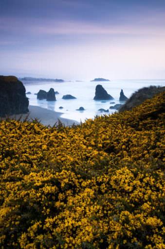 Heide vor dem Meer