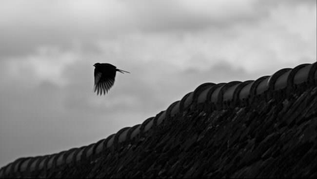 Vogel fliegt über eine Mauer