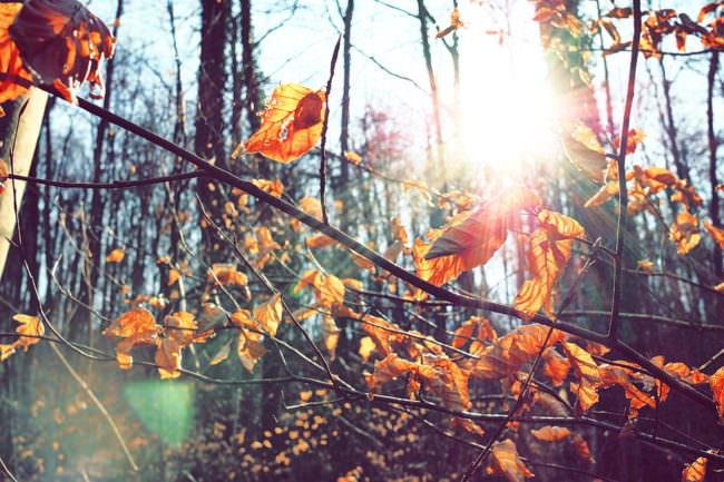 Lichtschein im Wald