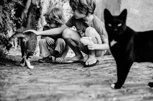Zwei Kinder mit Katzen