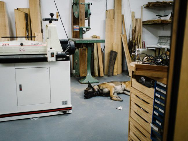 Gitarrenwerkstatt mit Hund