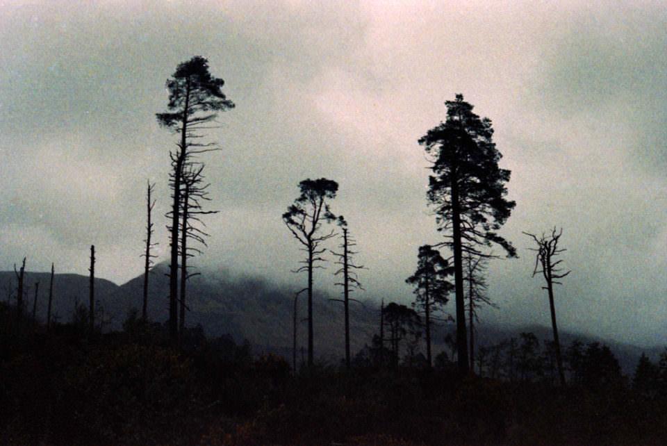 Wald in den Bergen und Nebel